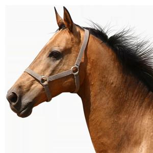 Bachblüten für Pferde