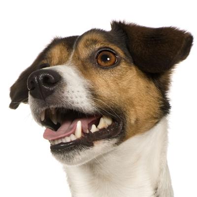 Shiatsu für Hunde Links
